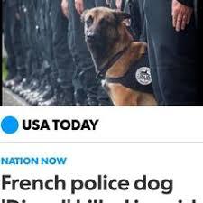 belgian shepherd killed still working on my smile pets petstagram dog dogsofinstagram