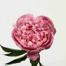 Bulk Peonies Peony Flower Buy Peonies In Bulk At Wholesale Price For Weddings