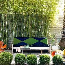 Bamboo Backyard 81 Best бамбук Images On Pinterest Bamboo Garden Landscaping