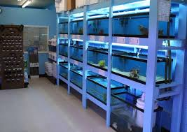 Aquascape Shop The Most Awesome Aquarium Fish Shop Ideas Aquascape Ideas