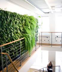 simple indoor green wall with various plants beside the stairs and