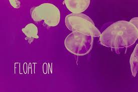 float on jellyfish art quote print 5x7 beach house decor