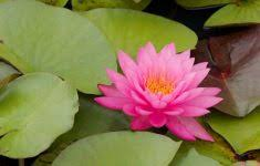 flower gardens pictures mba degree info