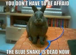 Funny Rabbit Memes - no idea funny rabbit rabbit and bunny