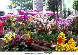 New Year Flower Decoration by Dh Flower Market Mong Kok Hong Kong Chinese New Year Flowers And