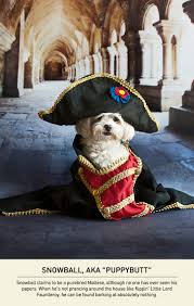 small house dogs hilarious small dogs with a napoleon complex