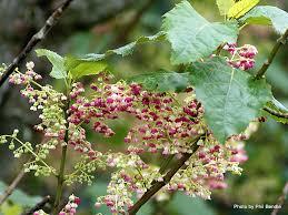 native new zealand plants list plant a native arrc wildlife trust
