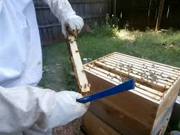 buzz beekeeping supplies