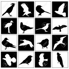 bird set royalty free cliparts vectors and stock illustration
