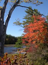 New England Foliage Map by New England Fall Foliage 2010 New England U0027s Narrow Road
