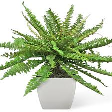 biophilic design and the best plants for your office verhalen inc