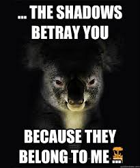 creepy koala memes quickmeme