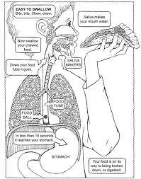 all worksheets free printable digestive system worksheets