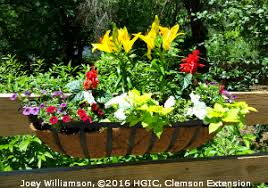 What To Plant In Window Flower Boxes - hgic 1154 hanging baskets u0026 window boxes extension clemson