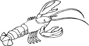 lobster outline outline of lobster clipart wikiclipart