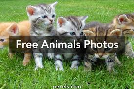 free stock photos of animals pexels