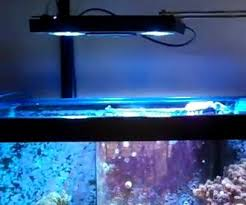 led reef lighting reviews led aquarium light review aquaray ecotech aqua illuminations