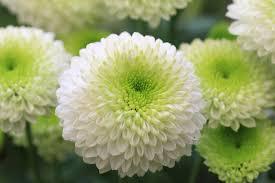 fleurs blanches mariage fleurs blanches signification des fleurs
