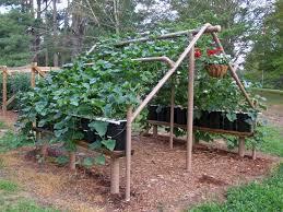 Diy Garden Trellis Ideas Vegetable Garden Trellis Plans U2013 Outdoor Decorations