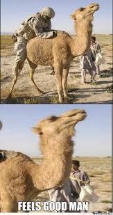 Camel Meme - feels good camel by blazedosan001 meme center