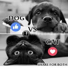 Funny Cat And Dog Memes - 25 best memes about dog vs cat dog vs cat memes