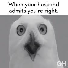 White Owl Meme - did you just say what i think you said good housekeeping