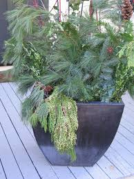 seasonal containers u2013 sun and shade gardening