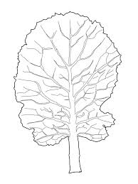 vegetable cabbage collard greens leaf coloring page flowers