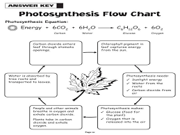 photosynthesis worksheet answers fts e info