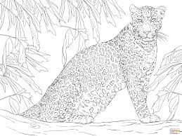 leopard sitting on tree coloring page free printable coloring pages