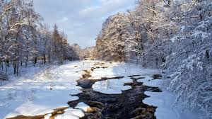 winter nature wallpapers winter leave untouched christmas tree winter nature forest hd