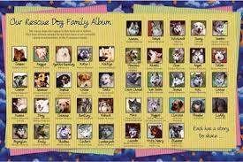 dog photo album dog behavior specialist pet loss expert diane pomerance ph d
