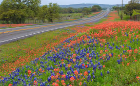 austin texas native plants best places to see wildflowers in austin central texas