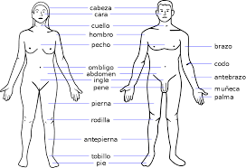 parts of the body on clipart library body parts worksheets and