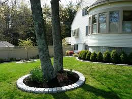 best 25 landscape around trees ideas on landscaping