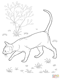 cat coloring page kitten and cat coloring sheets part 2 with pages