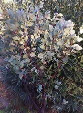 manzanita branches for sale manzanita branches centerpieces table decor ebay