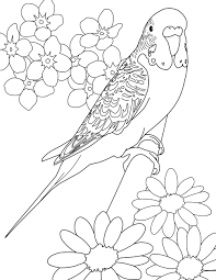 fantasy coloring pages s mac s place to be throughout dragonfly
