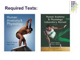 Human Anatomy And Physiology Lab Manual Marieb Biology 241 Human Anatomy And Physiology 1 Instructor Joel Dahms