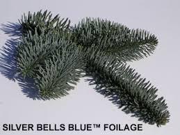 noble fir christmas tree noble fir christmas trees silver bells christmas tree farm