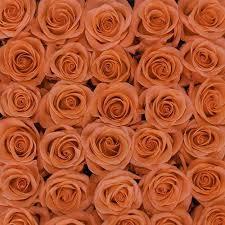 bulk roses 100 coral roses jr roses wholesale flowers