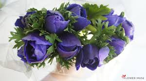 anemone flowers anemone flowers care and handling flower muse