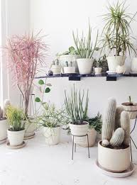 home decor with plants eclectic trends it s trending 3 ways of integrating plants in