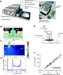 artery on a chip platform for automated multimodal assessment of