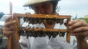 anarchy apiaries swarm the state