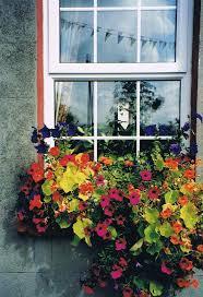 188 best window box ideas images on pinterest windows window