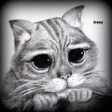 imagenes a lapiz de gatos dibujos gatos
