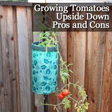 Upside Down Tomato Planter by Growing Tomatoes Upside Down Pros And Cons