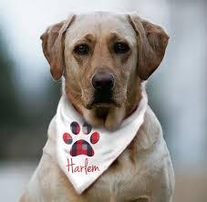 best 25 bandana ideas on puppy bandana size