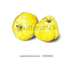yellow fruit stock images royalty free images u0026 vectors